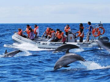 Transportation activities: Dolphins of the Bohol Sea